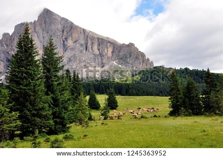 Hiking in the Dolomites #1245363952