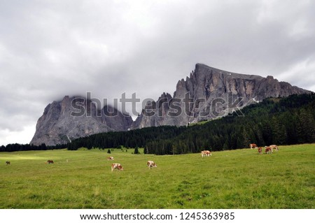 Hiking in the Dolomites #1245363985