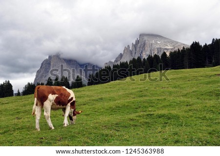 Hiking in the Dolomites #1245363988