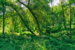 Hiking in the forest. Shot at mountain Vitosha near Sofia, Bulgaria