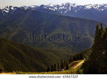 Hiking in the Green Valleys Evergreens, Snow Mountains Hurricane Ridge Olympic National Park Washington State Pacific Northwest  Ridge Line