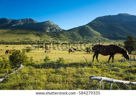 Hiking Paklenica Velebit Mountain Croatia Europe. Warm summer day. Beautiful nature and landscape. Horses