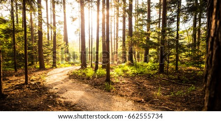 Hiking path and sunset in beautiful woods panoramic view, inspirational summer landscape in forest. Walking footpath or biking path, dirt road.