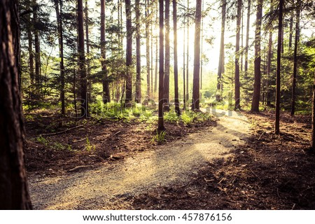 Hiking path and sunset in beautiful woods view, inspirational summer landscape in forest. Walking footpath or biking path, dirt road.