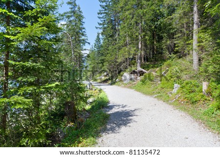 Hiking path through the forest in the bavarian alps