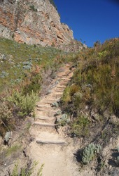 Hiking path up a mountain with log steps, surrounded by fynbos vegetation, mountain and blue sky.