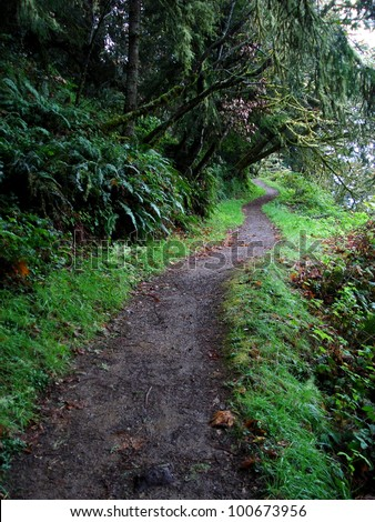 Hiking path winding through ferns, grass, and trees (Northern California, USA). Cool weather, gentle slope, easy hike or walk.