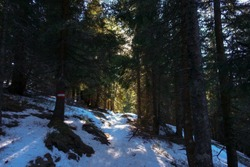 hiking path with snow and pinetrees in the winter landscape