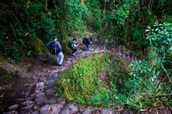 Hiking through the cloud forest on the Inka Trail, Peru