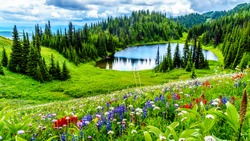 Hiking to Tod Lake through the alpine meadows filled with abundant wildflowers. On Tod Mountain at alpine village of Sun Peaks in the Shuswap Highlands of British Columbia, Canada