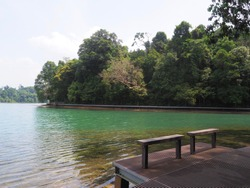 Hiking trail around Macritchie reservoir park with beautiful clean lake ,MacRitchie Reservoir which is Singapore's oldest reservoir completed in 1868