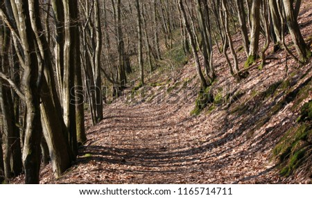 Hiking trail in a bold deciduous forest in early spring