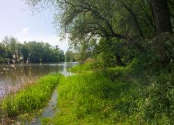 hiking trail in a riverside forest near the river inn in upper austria