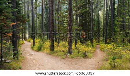 Hiking trail in Grand Teton National Park, Wyoming. #66363337