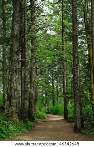 Hiking trail in rain forest at the gowlland tod provincial park, victoria, british columbia, canada