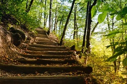Hiking trail in the forest. Steps among the trees leading to the mountain. Sochi, Russia