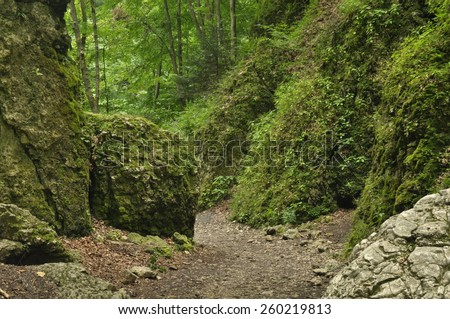 Hiking trail in the mountains. Path among the rocks in the beech forest. Tourism and recreation.