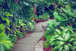 Hiking Trail In The Singapore Zoo. Beautiful nature