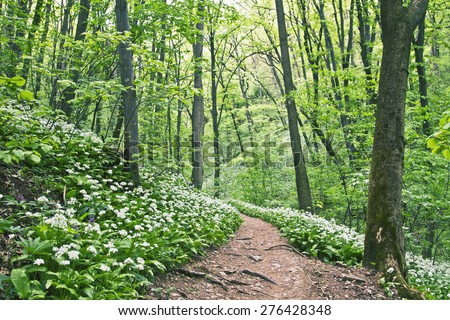Hiking trail in the woods