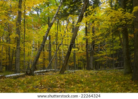 hiking trail in the woods of potawatomi state park in door county of wisconsin