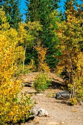 hiking trail leading into New fall foliage during  autumn 2021 colors in the Colorado Rocky Mountains