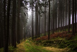 Hiking trail through an autumnal forest