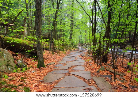 Hiking Trail through an old growth forest in Ricketts Glen State Park, a national natural landmark near Benton, Pennsylvania in Luzerne County.