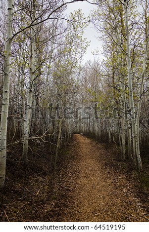 Hiking trail through aspens in the fall