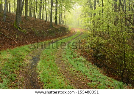 Hiking Trail through Beech Tree Forest