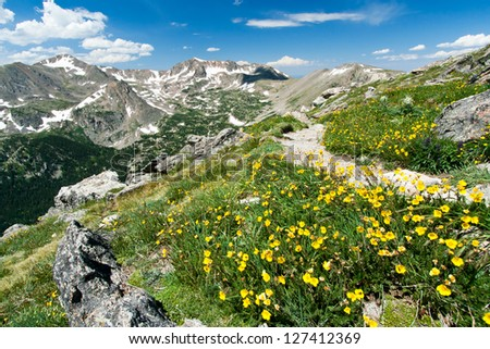 Hiking trail through field of wildflowers in the Colorado Mountains Wilderness
