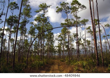 Hiking trail through Long Pine Key, Everglades National Park