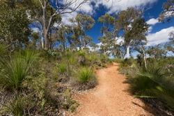 Hiking trail through the bush at South Ledge, near Kalamunda, Western Australia