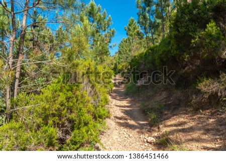 Hiking trail to the Pic du Cap Roux in the Massif de l'Esterel near Antheor in the Department Var of the province Provence-Alpes-Cote d´Azur