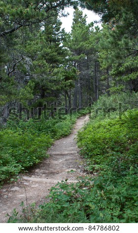hiking trail trough the forest in glacier montana