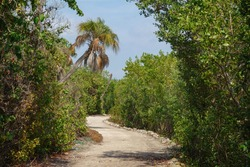 Hiking trail winding through dense green vegetation, including mangrove forest, in a coastal nature preserve in west central Florida, for themes of recreation, conservation, escapism