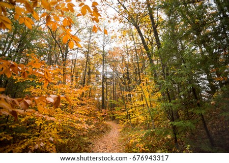 Hiking trail with fall leaves.