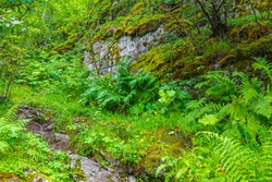 Hiking trails in Norwegian nature through mountains and forests in Utladalen Norway.