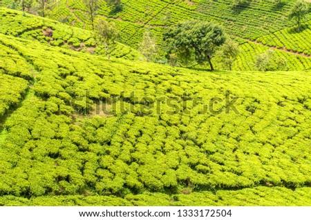 Hill country tea plantation in the Central Highlands near Nuwara Eliya, Sri Lanka, Asia. #1333172504