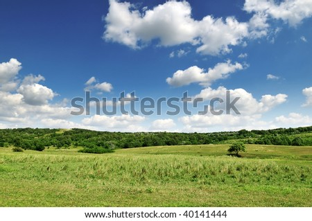 hill covered by a grass and tree