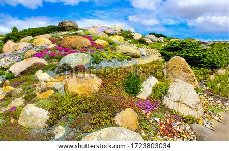 Hill of stones in spring blooming flowers