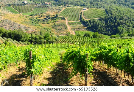 Hill Of Tuscany With Vineyard In The Chianti Region