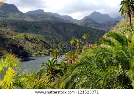 hills covered with tropical forest