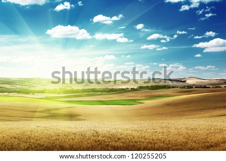 hills of barley in Tuscany, Italy #120255205