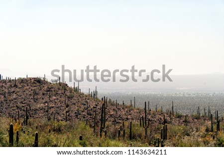 Hillside covered with cactus and bushes overlooking a hazy valley with distance mountains.