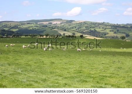Hillside in Wales, Great Britain