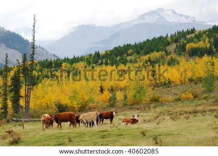 Hillside pasture in sheep river valley, alberta, canada #40602085
