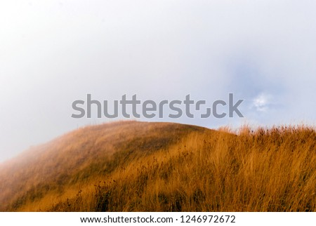 hilltop with yellow autumn grass in the fog