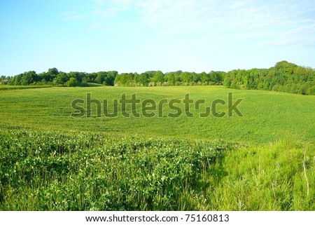 Hilly Grassland in Denmark on Summer Day