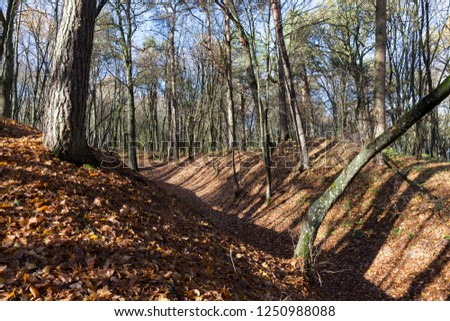 Hilly territory in the forest at the end of autumn, bare trees without foliage, foliage to lie On the soil #1250988088