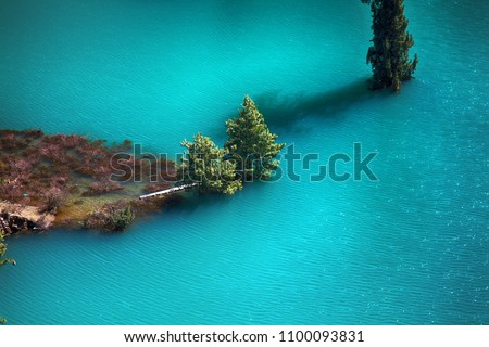 Himalayan firs and Himalayan spruce in water. Amazing flooded forests, turquoise lake. Trees rise from lake. Unusual Himalayan valley, wonder of world, seven wonders